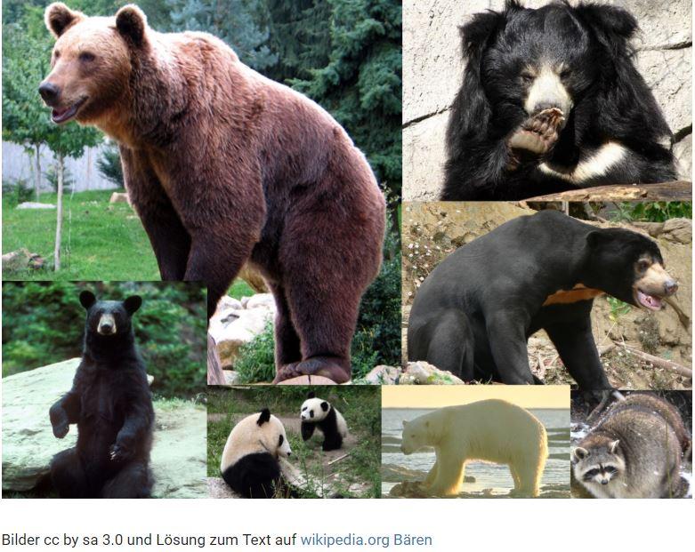 bärenparks schweiz