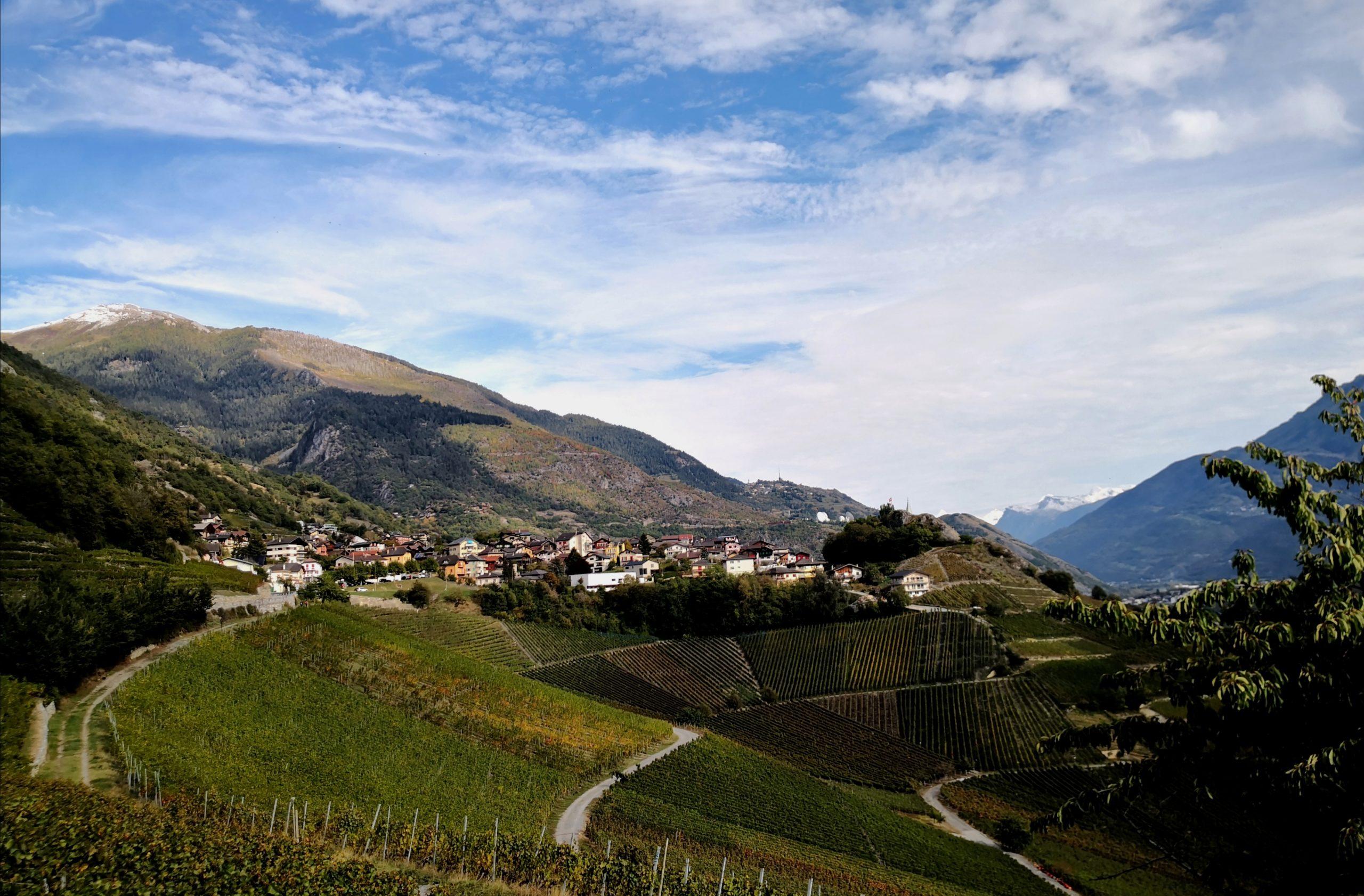 Weinberg besichtigen im Wallis